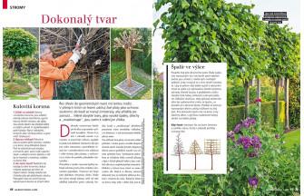 Speciál Jak řezat stromy a keře